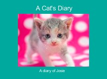 A Cat's Diary
