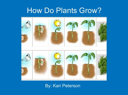 How Do Plants Grow  on Plant Life Cycle Book