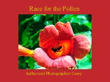 Race for the Pollen