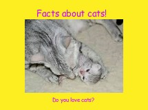 Facts about cats!