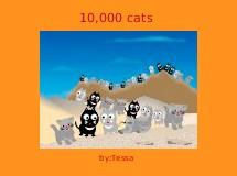 10,000 cats