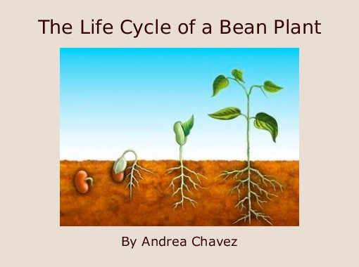 """The Life Cycle of a Bean Plant"" - Free Books & Children's ..."