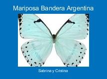 Mariposa Bandera Argentina