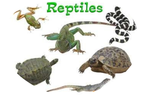 """All About Reptiles"" - Free Books & Children's Stories ... 10 Examples Of Reptiles"