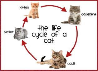 How Long Does L Cat Litter Last