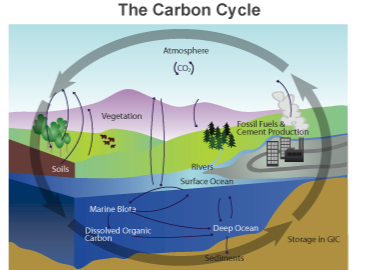 carbon cycle story Whilst most of the carbon in the resulting biomass will re-enter the atmosphere  through the carbon cycle, a small amount will fall into the depths.