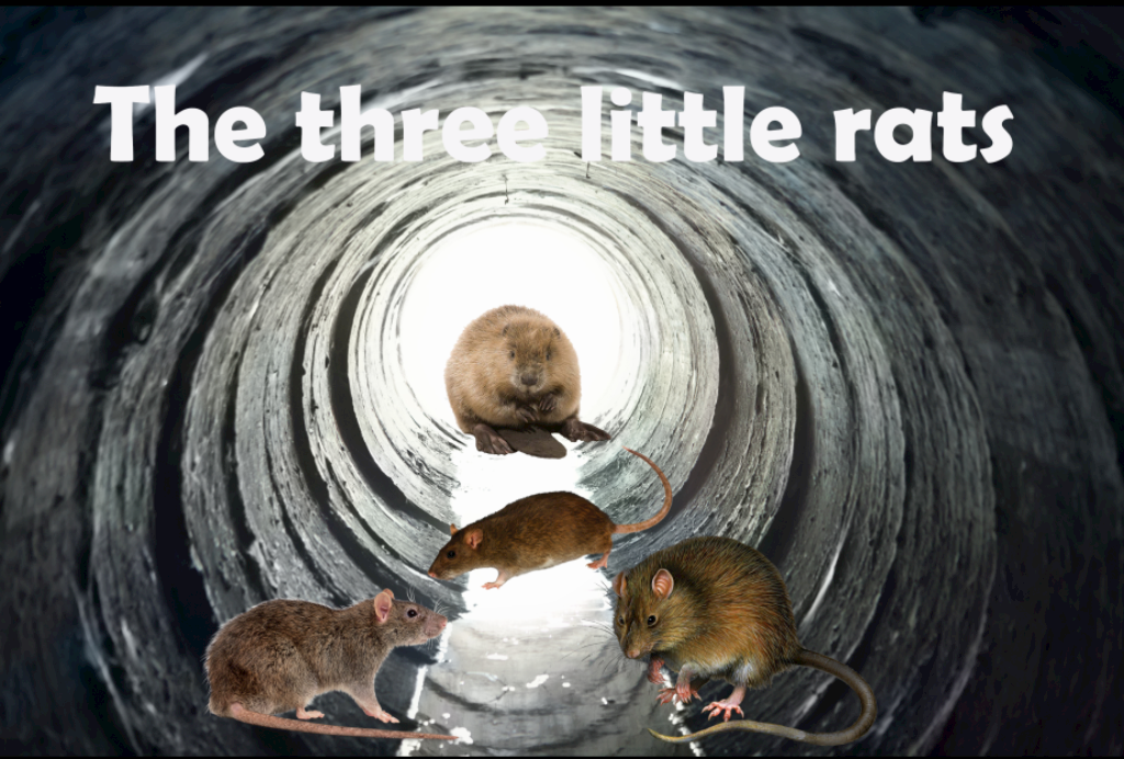 The three little rats\