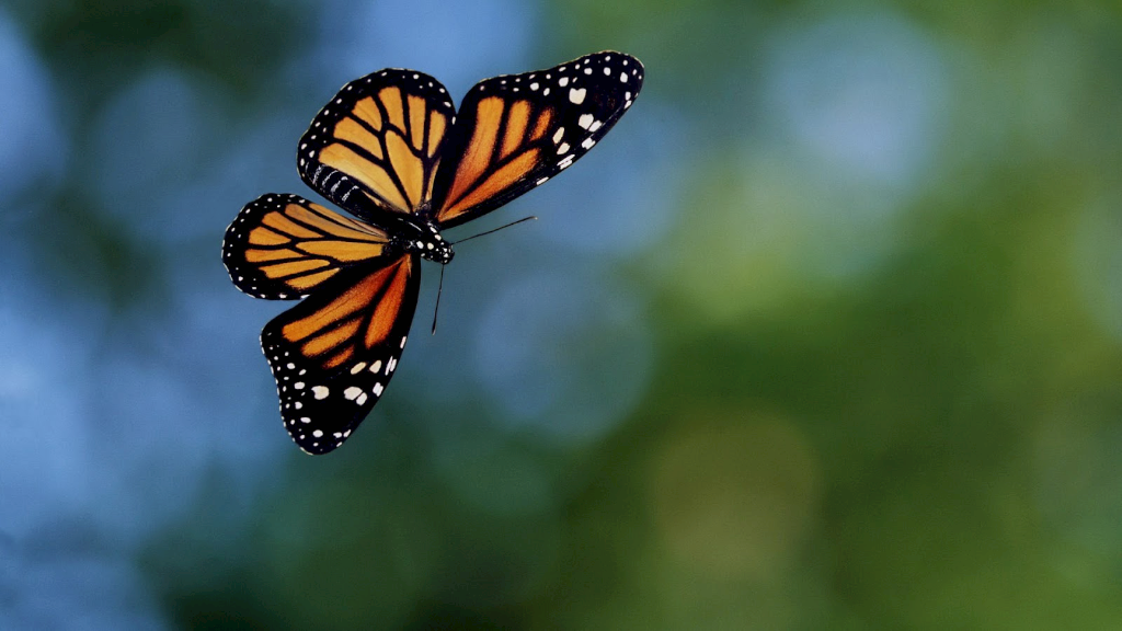 The Stages Of A Butterfly Free Books Childrens Stories Online