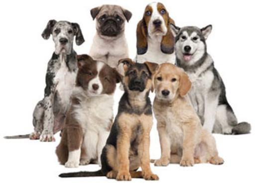 """""""Dog Breeds A-Z"""" - Free Books & Children's Stories Online ... - photo#15"""